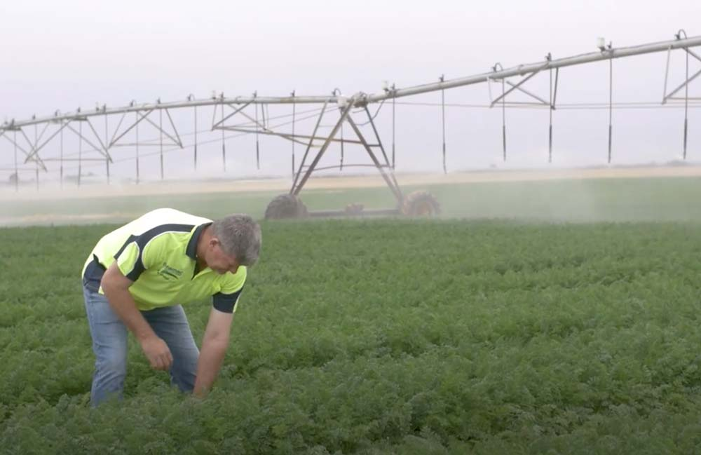 Using Video to Explain the Science Behind Commercial Vegetable Growing